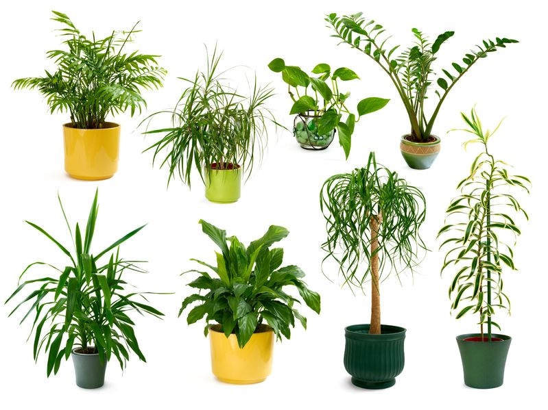 Picture of 8 house plants
