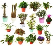 collection of house plants picture