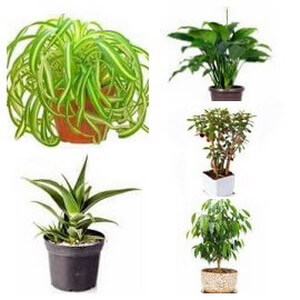 common house plant types collage