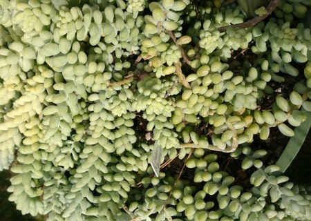 Picture of Donkey's tail