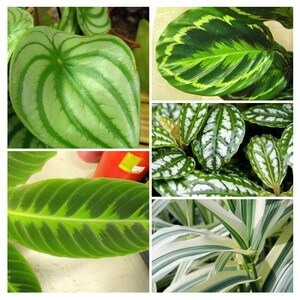 foliage house plant types collage
