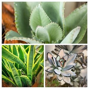 collage of succulent type house plants