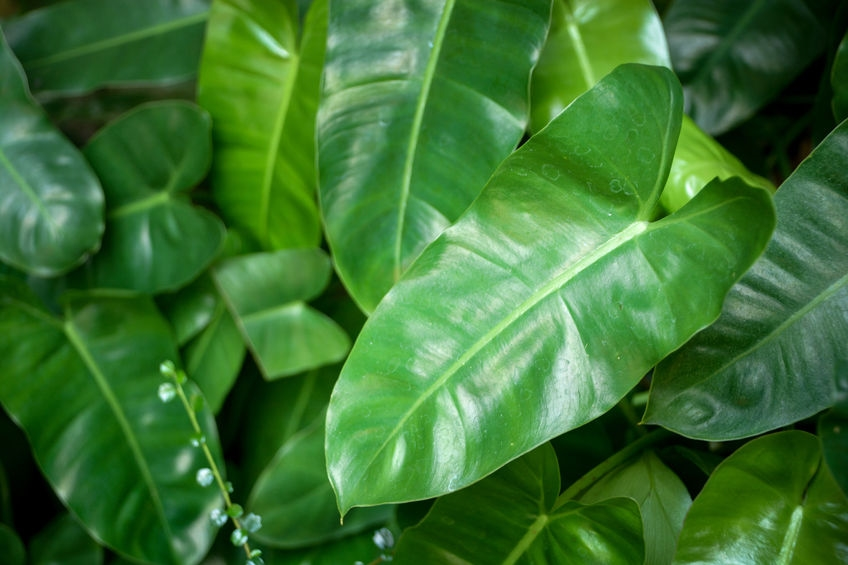 A-Z List Of House Plants - Common and Scientific Names