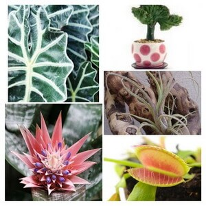 House plants guide and tips houseplantsexpert com - Interesting house plants ...