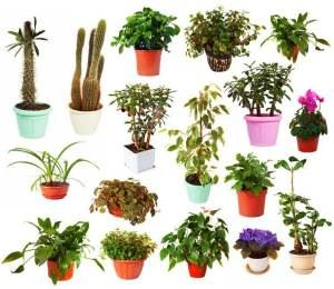 Picture of a plant collection