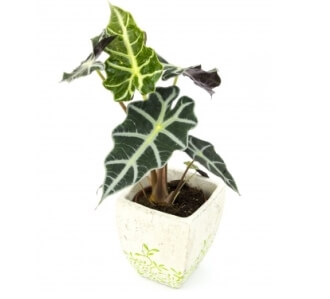 picture of plant
