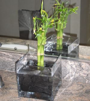 Picture Of Lucky Bamboo In Bathroom
