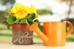 Picture of a plant and watering can