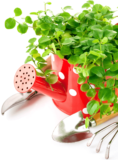 Picture of a plant sitting in a a watering can