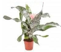 urn plant picture