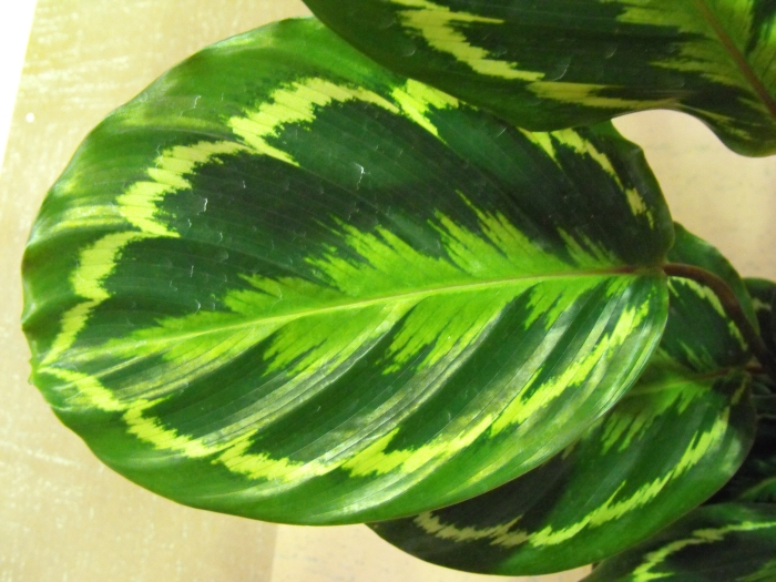 Close Up Of Leaf Plant Picture