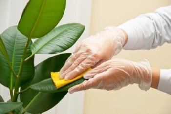 Image result for cleaning indoor plants